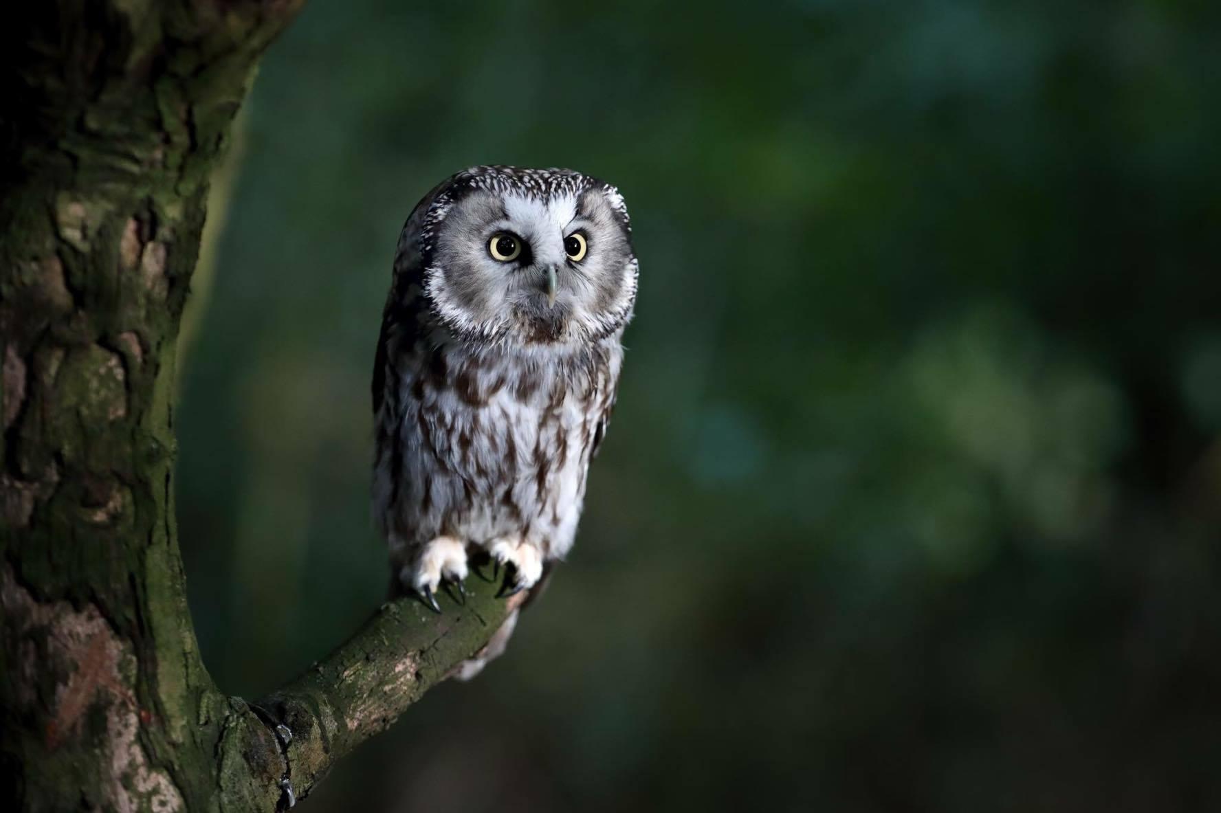 Kent Owl Academy - Kent Life