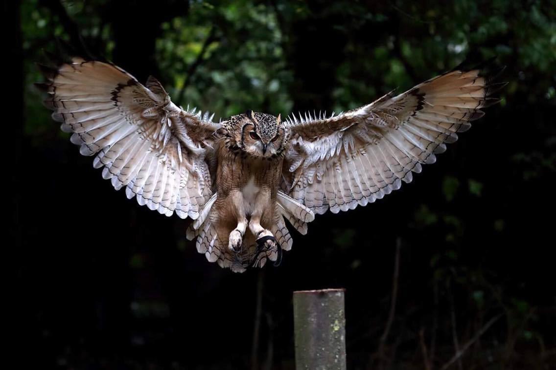 Kent Owl Academy Life
